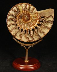 Exquisite Cast Bronze Ammonite Stand