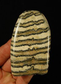 Polished Mammoth Tooth Slice