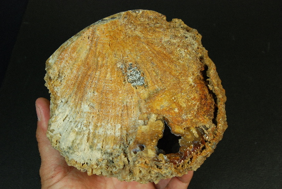 Fantastic Agatized Coral Geode - Click Image to Close